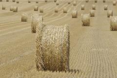 Stock Photo of field harvest landscape straw round balls nieder