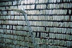 Toimisto arkisto järjestää asiakirja hylly siviili Kuvituskuvat
