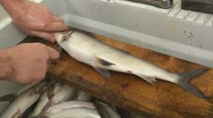 Gutting fish Stock Footage