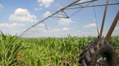 Irrigation of corn fields - stock footage