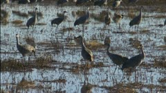 Waterfowl Roost In Wetlands Stock Footage