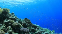 Coral Reef and Tropical Fish - stock footage
