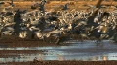 Beautiful Birds Wings Landing Stock Footage