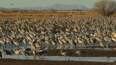 Birds Fly Over Wetland Flock Stock Footage