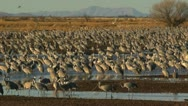 Stock Video Footage of Birds Fly Over Wetland Flock