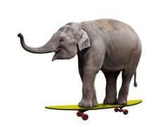 Skateboarding elephant Stock Photos
