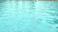 Freestyle swimmer in the pool Stock Footage