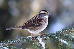 bird in snow - stock photo