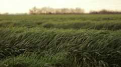 Green grass blows gently in the wind 4 Stock Footage