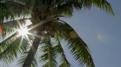 Bora Bora PalmTree Stock Footage