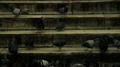 Pigeons walking on the stairs Stock Footage