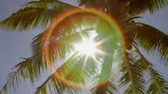 Palm Tree Pan - stock footage
