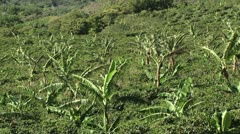 Coffee Plantation 1 Arkistovideo