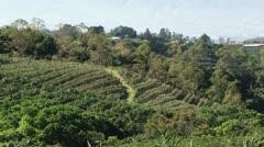 Coffee plantation 3 Stock Footage