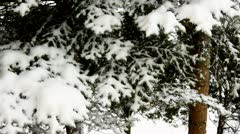 Close-up of fir branches covered with snow during snowfall Stock Footage