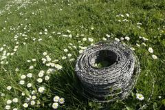 Barbwire and daisy flowers on a meadow Stock Photos