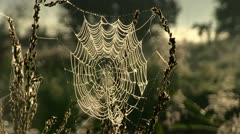 spider's web - stock footage