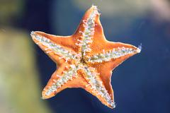 Underside of the starfish Stock Photos