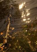 Lake Shimmer - stock photo