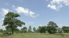 Burkina Faso: Static shot of Aggro-Forestry Stock Footage