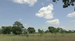Burkina Faso: Aggro-forestry Stock Footage