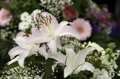 White Asiatic Lillies - stock photo