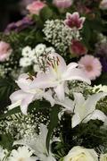 White Asiatic Lillies - stock photo