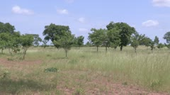 Burkina Faso: Agroforestry Stock Footage