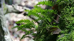 Leaves in the Forest Stock Footage