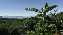 Coffee plantation 5 Stock Footage