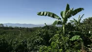 Stock Video Footage of Coffee plantation 5