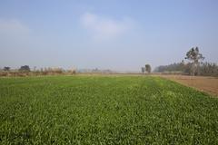 hazy punjabi landscape - stock photo