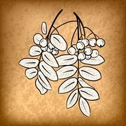 rowanberry - stock illustration