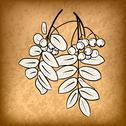 Stock Illustration of rowanberry