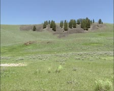 Prairie at Lamar Valley, Yellowstone National Park, Pronghorn grazing Stock Footage