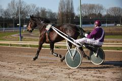 Harness Racing .horse - stock photo