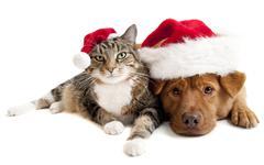 Cat and dog with santas claus hats Stock Photos