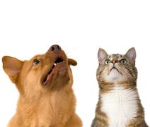 Dog and cat looking up Stock Photos