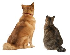 cat and dog looking up - stock photo