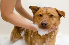 Dog taking a bath Stock Photos