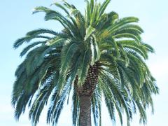 Beautiful palm tree Stock Photos