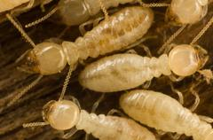 Termites Stock Photos