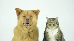 Dog-and-cat-together - stock footage