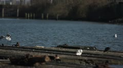 Seagulls at Watergate in Holtenau 02 Stock Footage