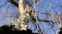 Cat sitting on a tree Stock Footage