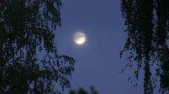 The moon through the tree branches Stock Footage
