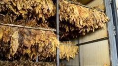 Dry tobacco leaf in stove factory Stock Footage