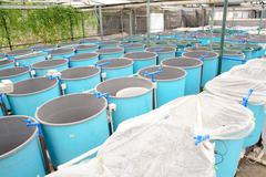 Stock Photo of winter aquaculture hothouse