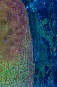 Lymph gland tissue Stock Photos