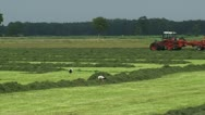 Stock Video Footage of White storks forage in hayland + tractor farmer in background